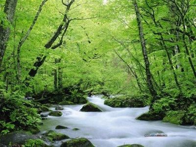 Izvir reke Mirne